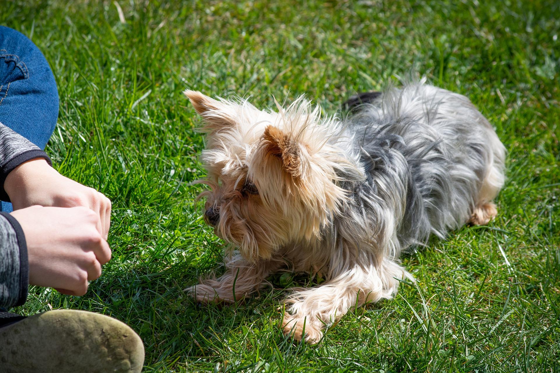 Quels sont les différents types d'apprentissage chez le chien ?